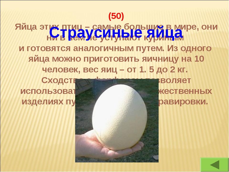 (50) Яйца этих птиц – самые большие в мире, они ни в чем не уступают куриным...