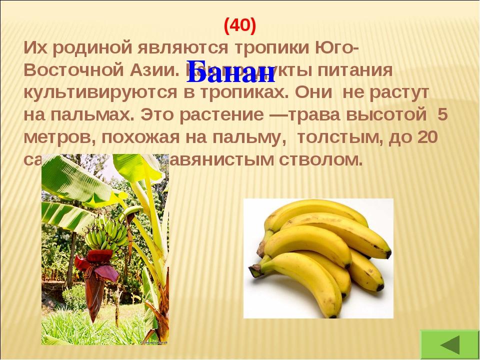 (40) Их родиной являются тропики Юго-Восточной Азии. Как продукты питания кул...