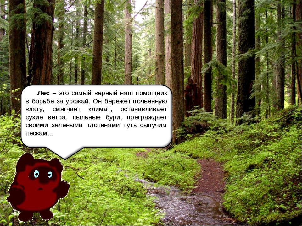 Лес – это самый верный наш помощник в борьбе за урожай. Он бережет почвенную...