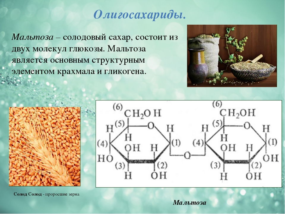Мальтоза Олигосахариды. Мальтоза – солодовый сахар, состоит из двух молекул г...
