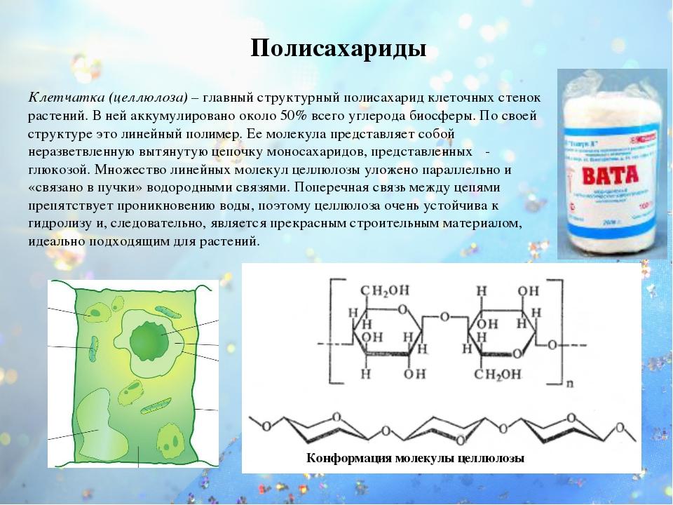 Конформация молекулы целлюлозы Полисахариды Клетчатка (целлюлоза) – главный с...