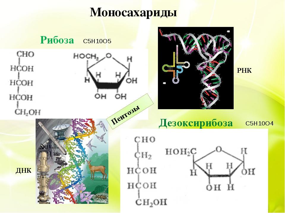 Моносахариды РНК ДНК Пентозы Рибоза Дезоксирибоза C5H10O5 C5H10O4