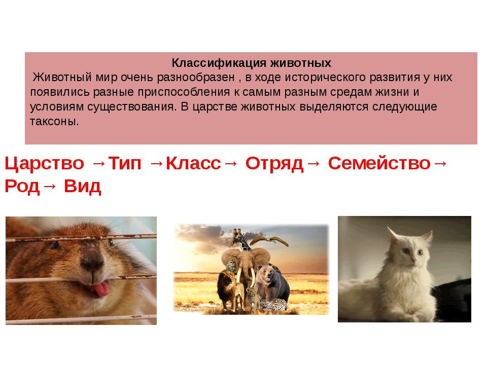 Классификация животных Животный мир очень разнообразен , в ходе исторического...
