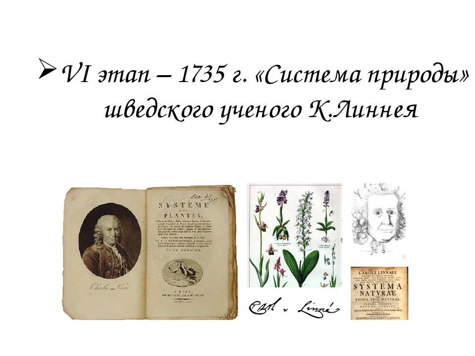VI этап – 1735 г. «Система природы» шведского ученого К.Линнея