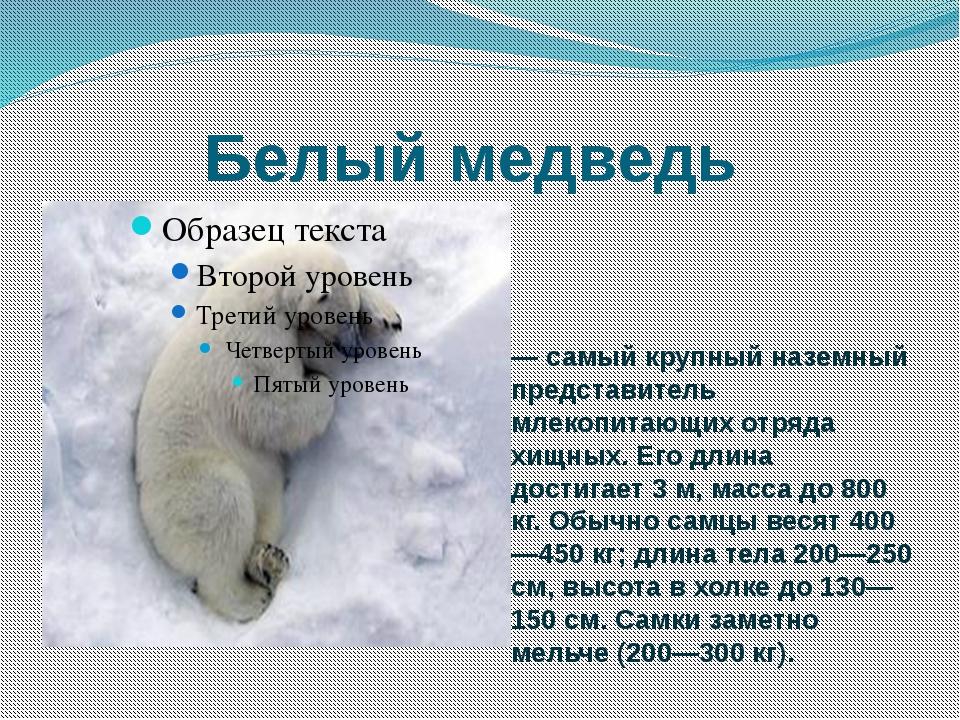 каждом картинки среда обитания белого медведя дело