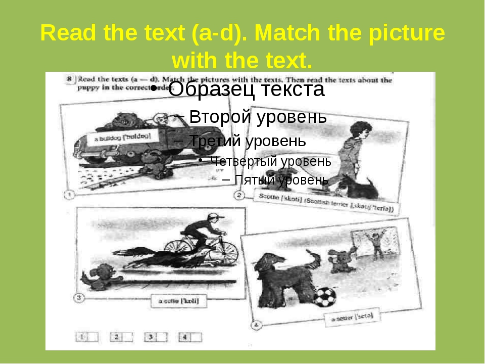 Read the text (a-d). Match the picture with the text.