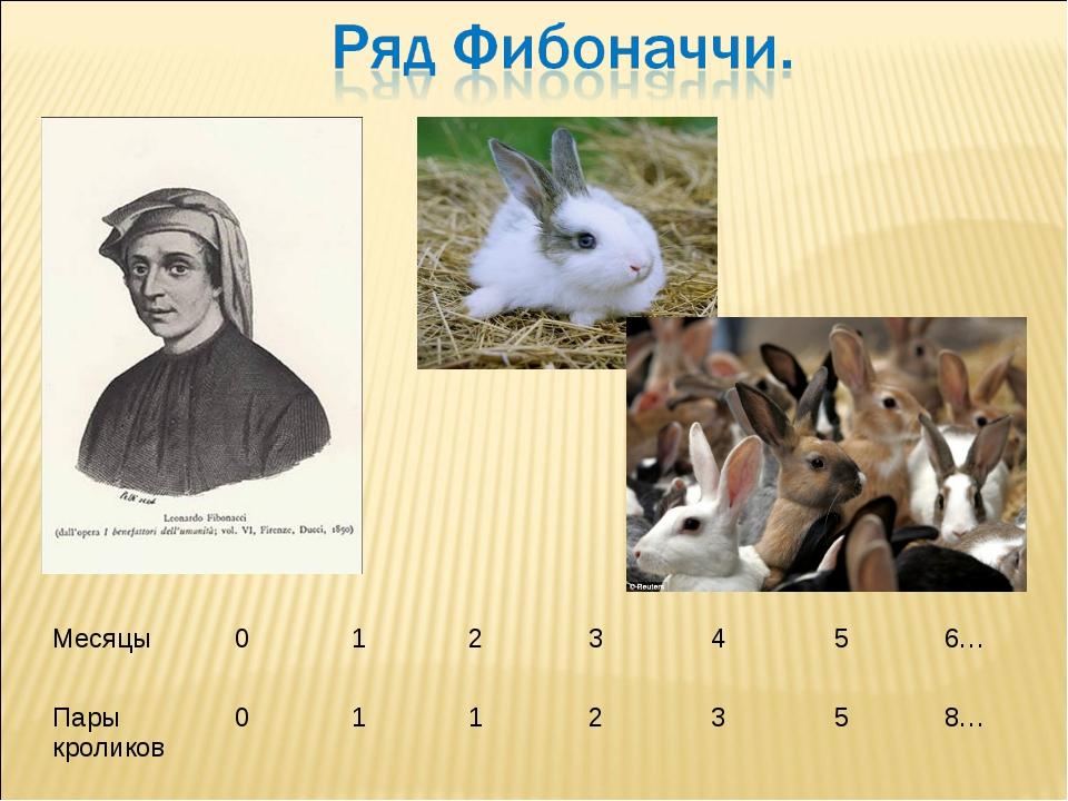 Месяцы0123456… Пары кроликов0112358…