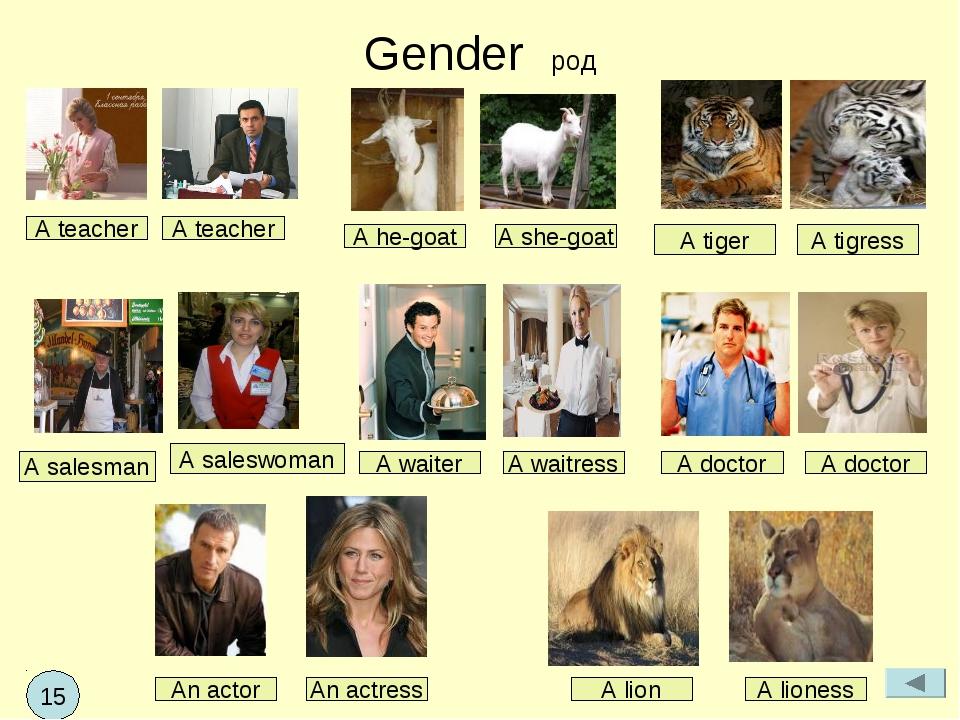Gender род A teacher A teacher A tigress A salesman A saleswoman A waiter A w...