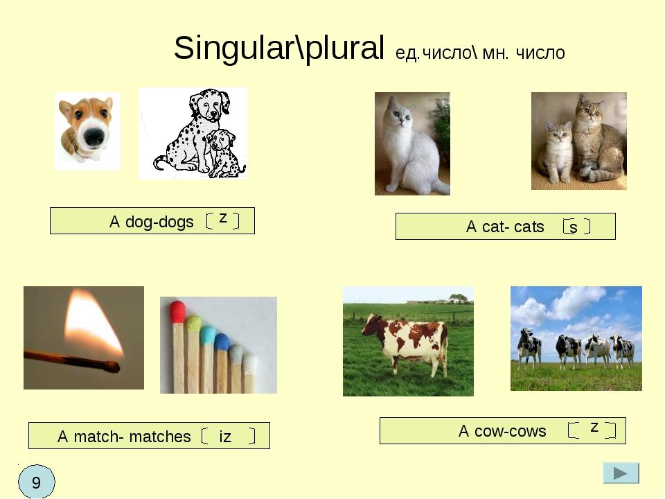 Singular\plural ед.число\ мн. число A dog-dogs A cat- cats A match- matches...