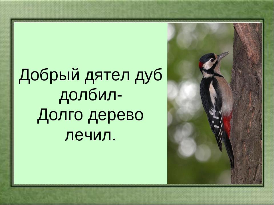Добрый дятел дуб долбил- Долго дерево лечил.