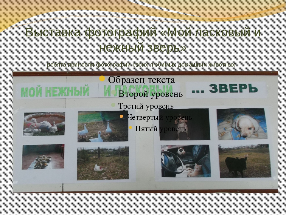 Выставка фотографий «Мой ласковый и нежный зверь» ребята принесли фотографии...