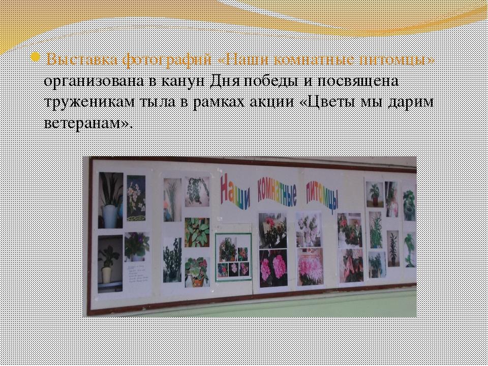 Выставка фотографий «Наши комнатные питомцы» организована в канун Дня победы...