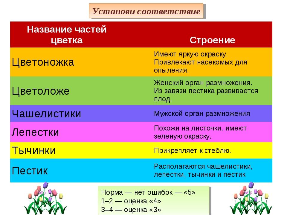 Норма— нет ошибок— «5» 1–2— оценка «4» 3–4— оценка «3» Установи соответст...