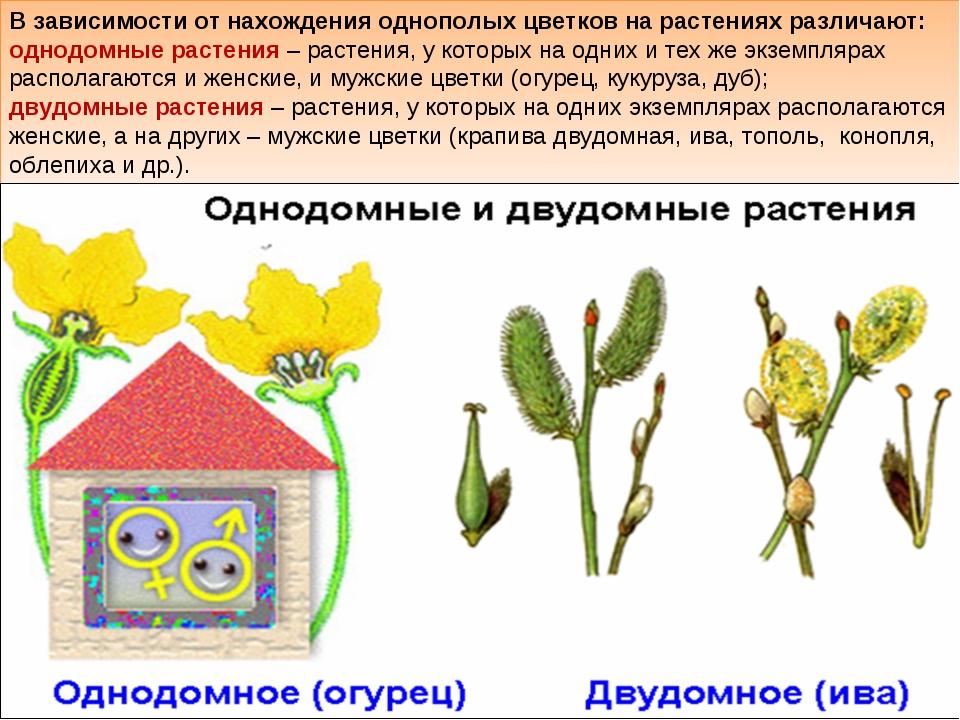 В зависимости от нахождения однополых цветков на растениях различают: однодом...