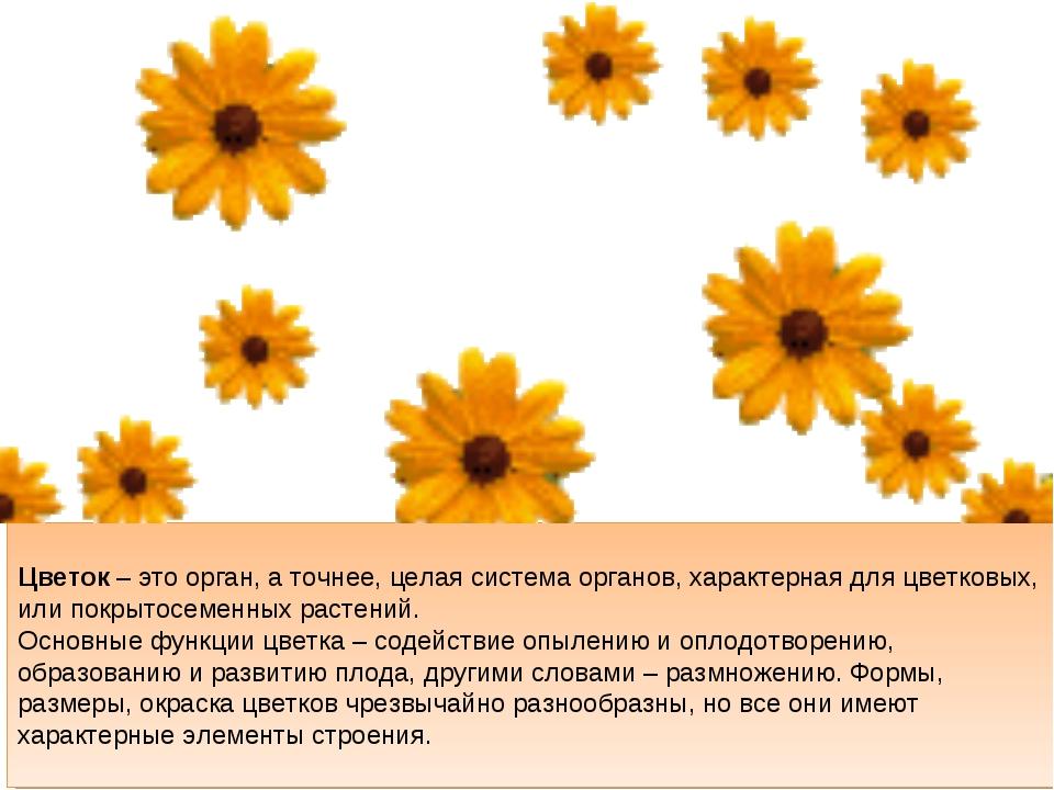 Цветок – это орган, а точнее, целая система органов, характерная для цветков...