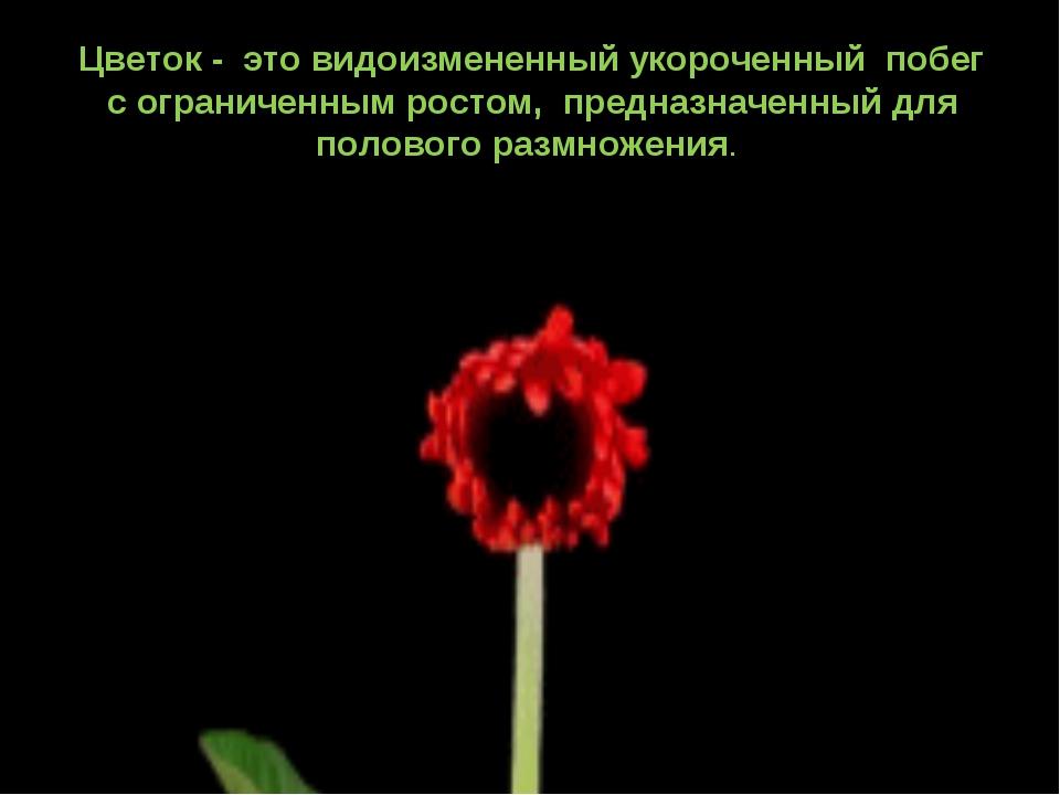 Цветок - это видоизмененный укороченный побег с ограниченным ростом, предн...