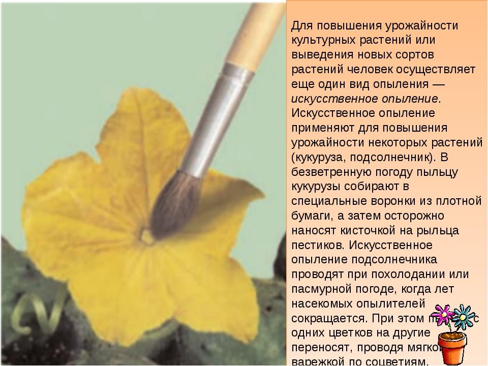 Для повышения урожайности культурных растений или выведения новых сортов рас...