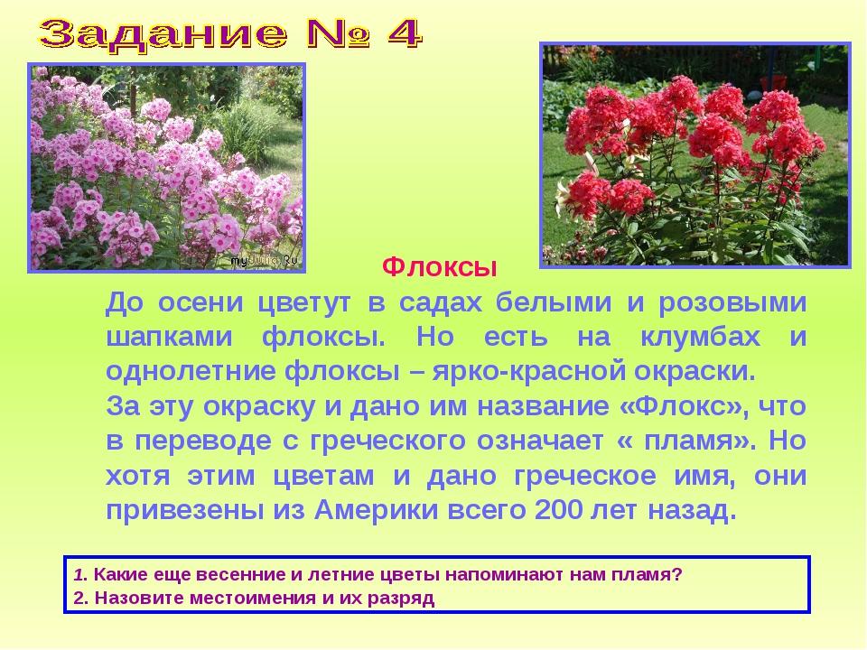 Флоксы До осени цветут в садах белыми и розовыми шапками флоксы. Но есть на...