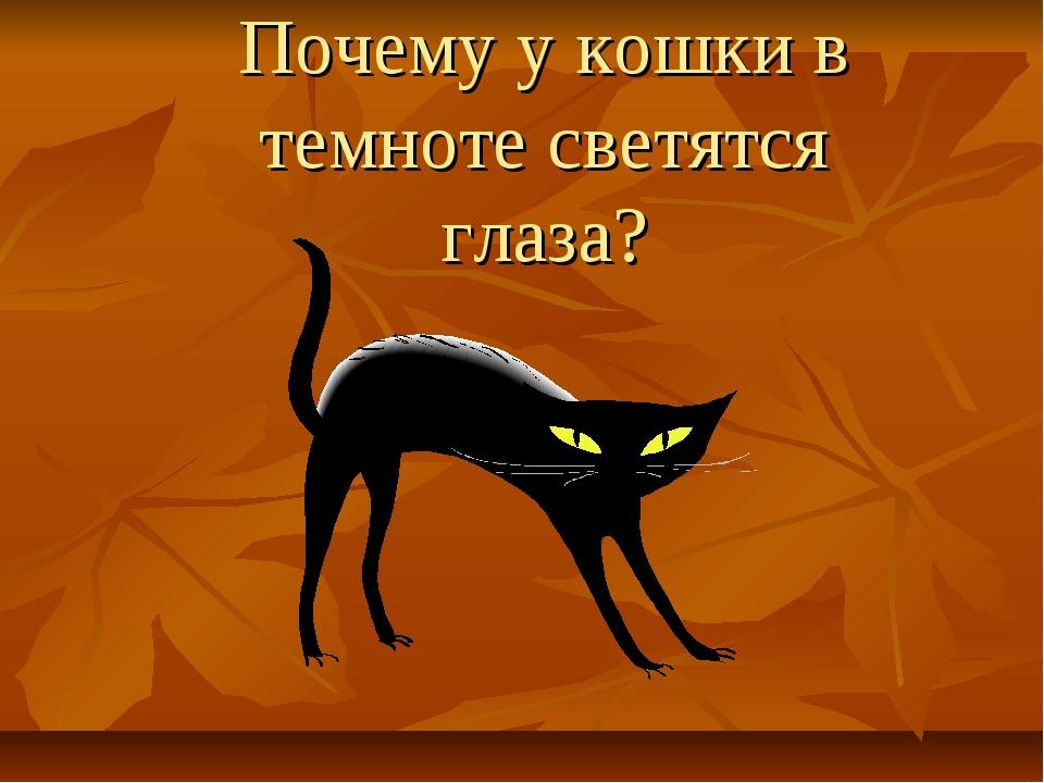 Почему у кошки в темноте светятся глаза?