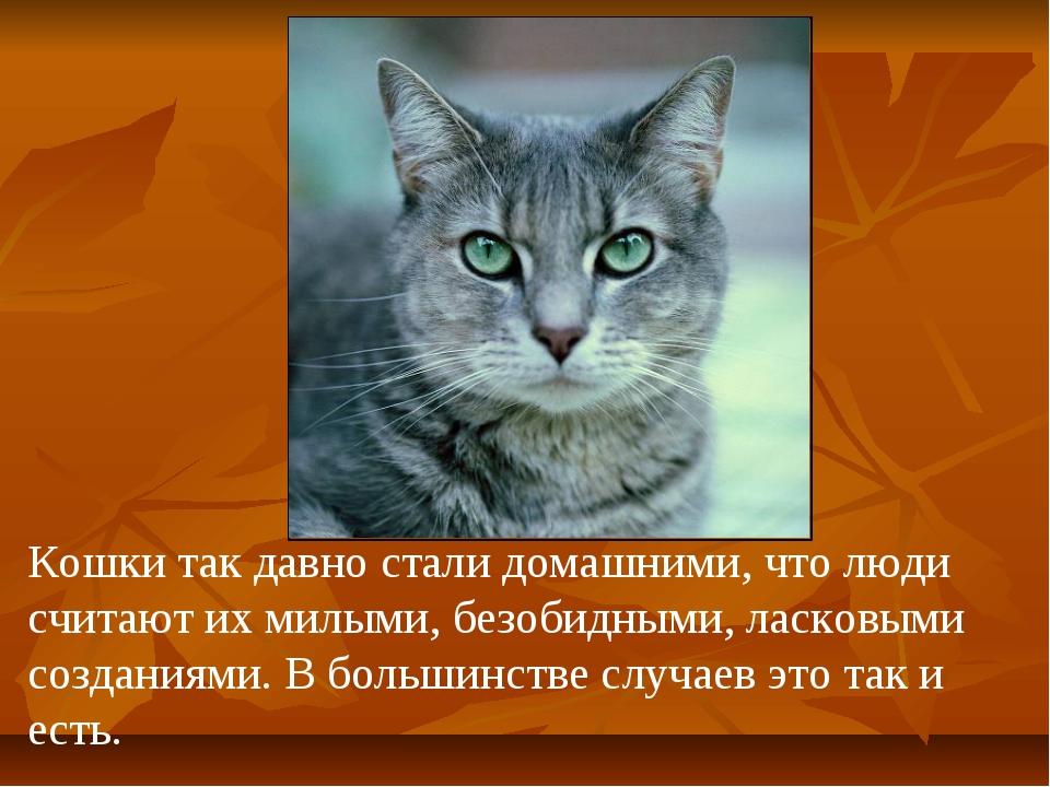 Кошки так давно стали домашними, что люди считают их милыми, безобидными, лас...