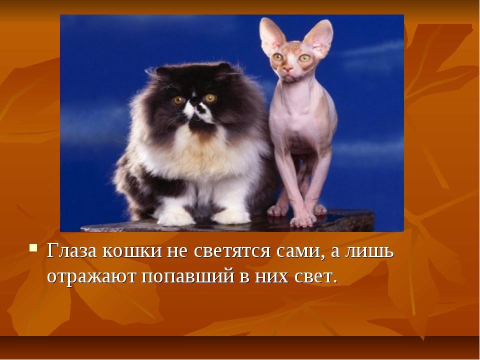 Глаза кошки не светятся сами, а лишь отражают попавший в них свет.