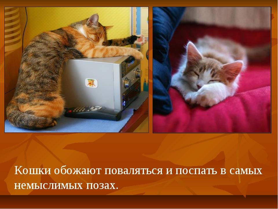 Кошки обожают поваляться и поспать в самых немыслимых позах.
