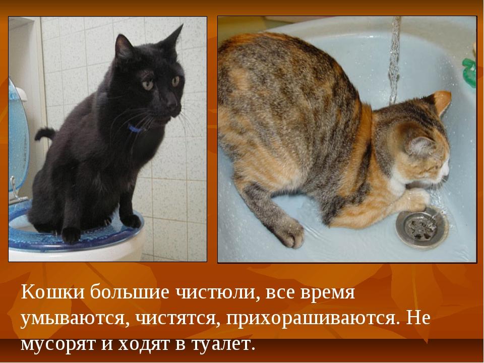 Кошки большие чистюли, все время умываются, чистятся, прихорашиваются. Не мус...