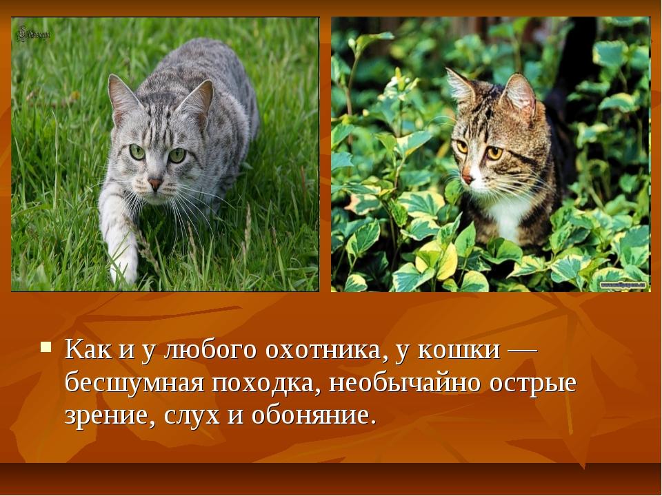 Как и у любого охотника, у кошки — бесшумная походка, необычайно острые зрен...