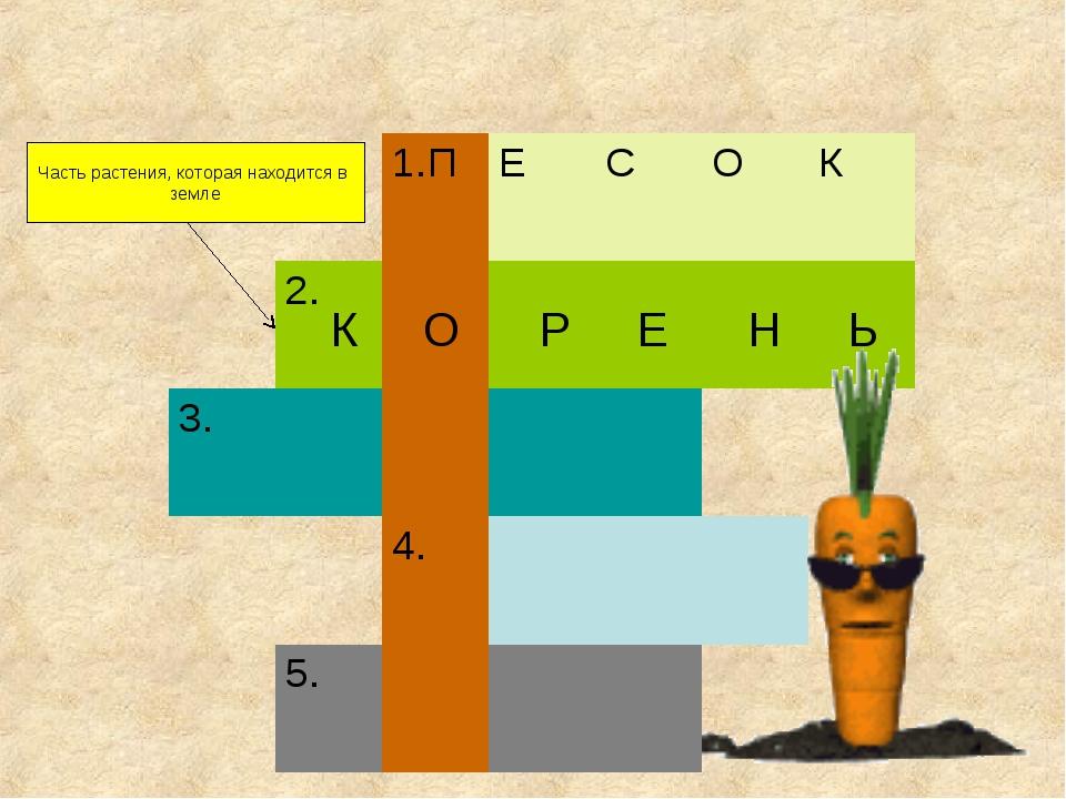 Часть растения, которая находится в земле К О Р Е Н Ь 1.ПЕСОК 2....