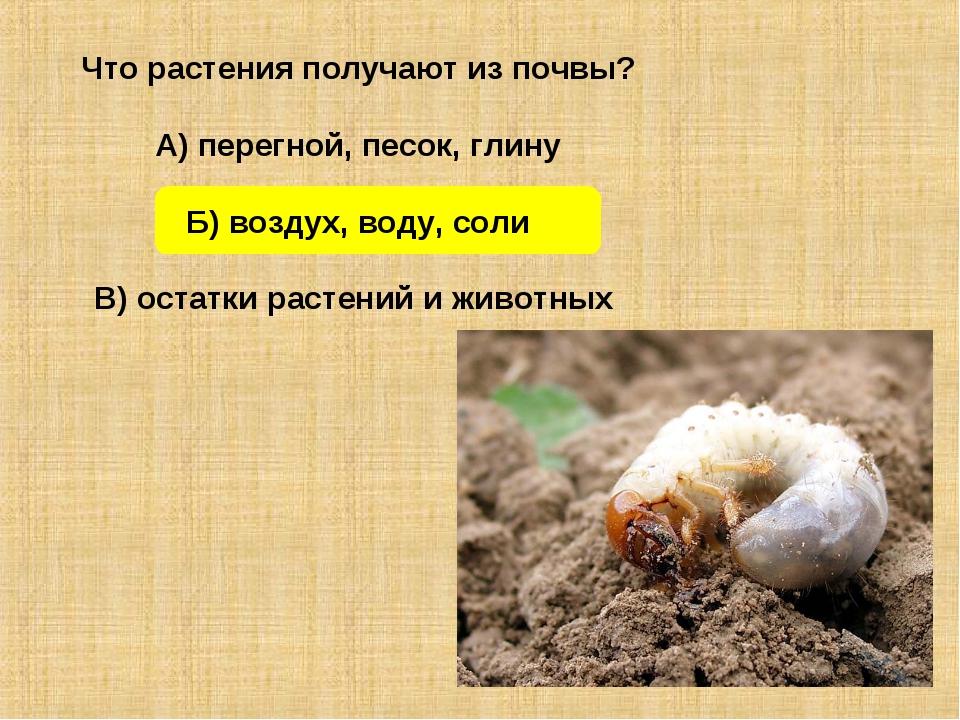 Что растения получают из почвы? А) перегной, песок, глину Б) воздух, воду, со...