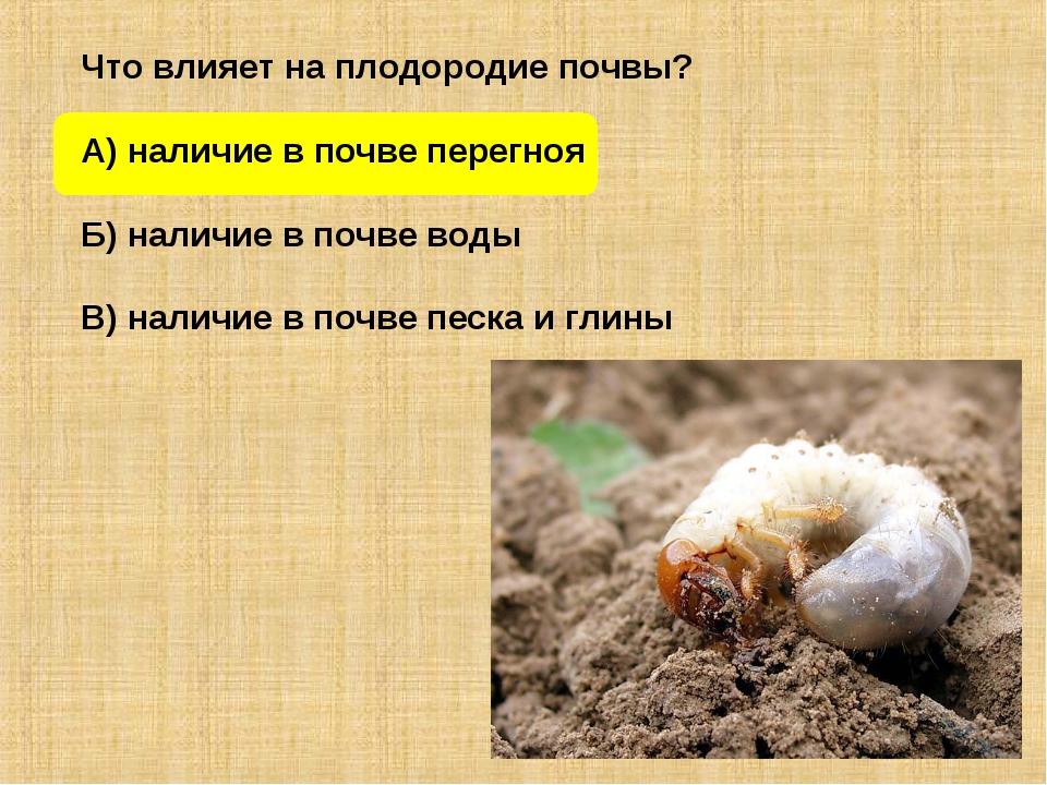 Что влияет на плодородие почвы? А) наличие в почве перегноя Б) наличие в поч...