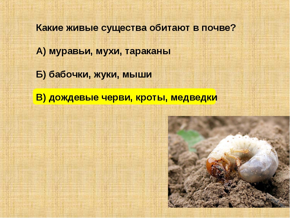 Какие живые существа обитают в почве? А) муравьи, мухи, тараканы Б) бабочки,...