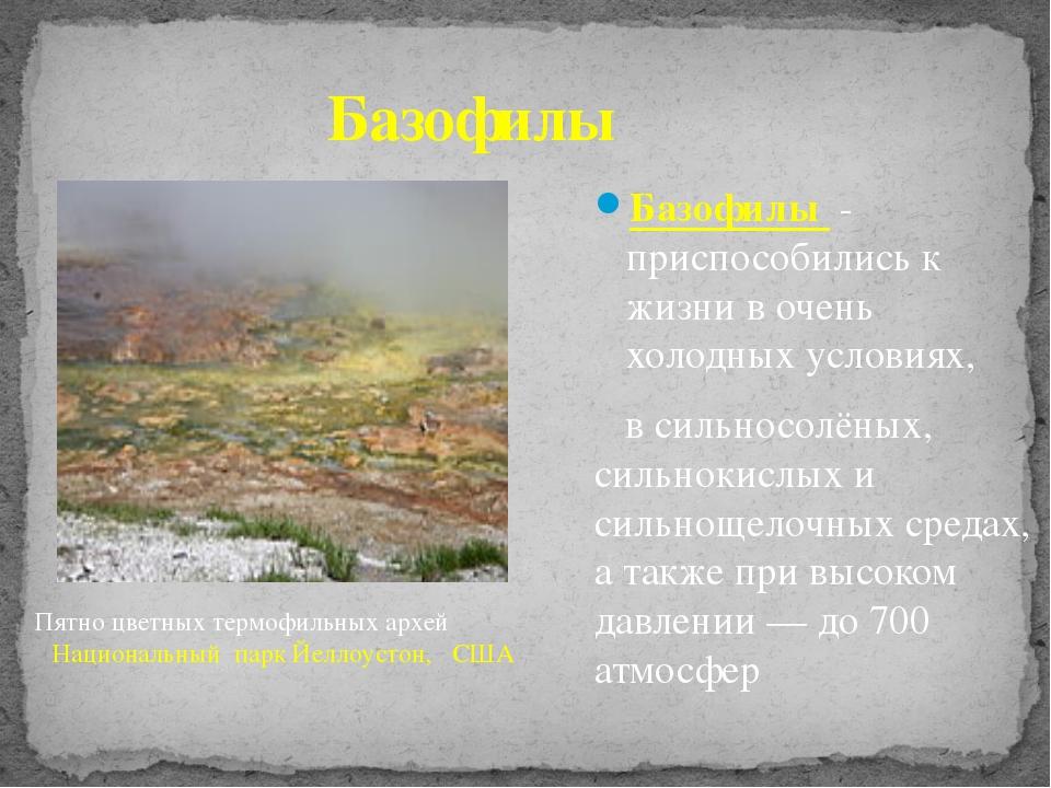 Базофилы Базофилы - приспособились к жизни в очень холодных условиях, в сильн...