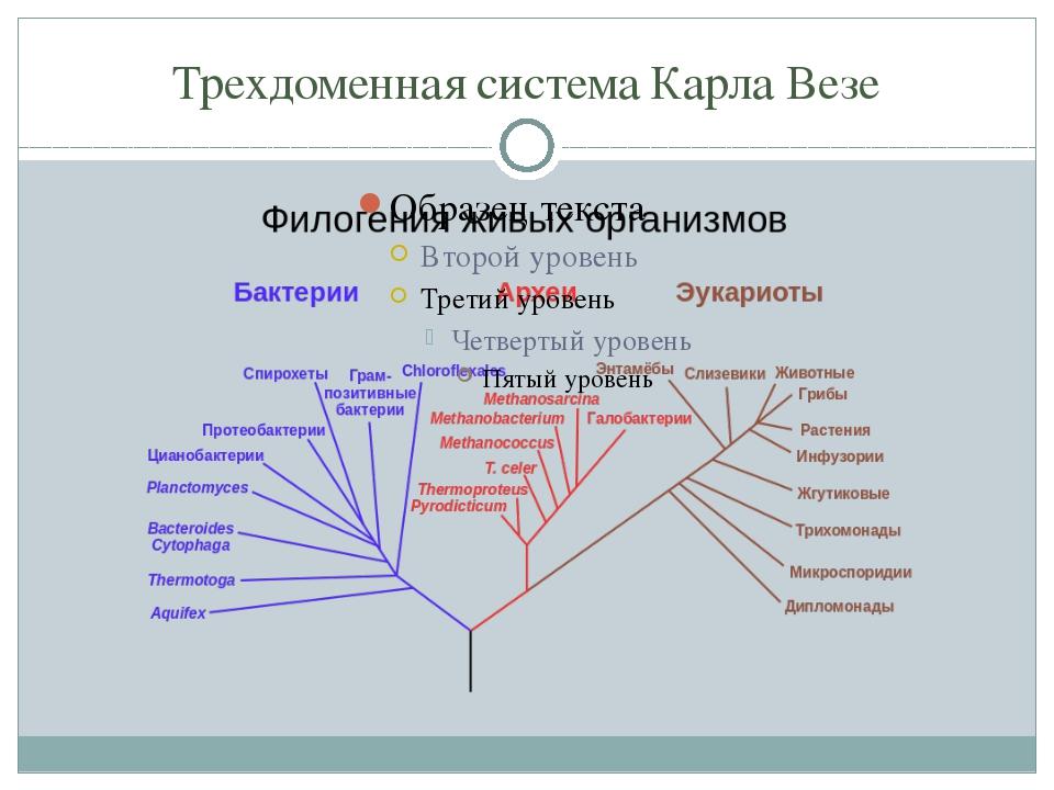 Трехдоменная система Карла Везе