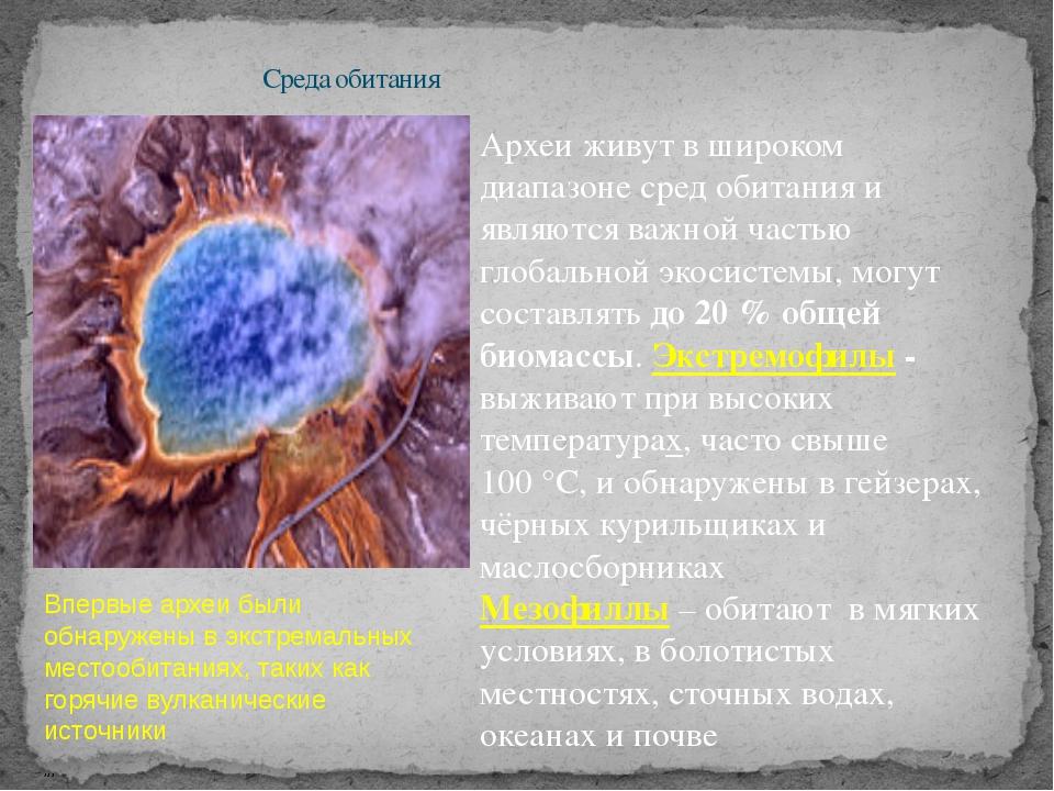 Среда обитания Впервые археи были обнаружены в экстремальных местообитаниях,...