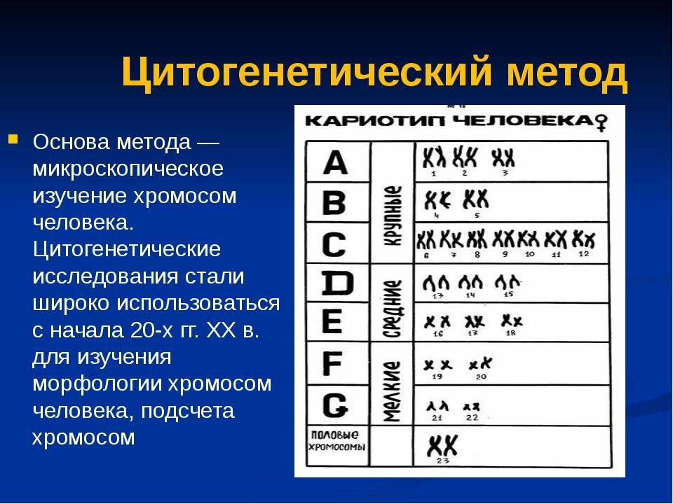 Цитогенетический метод Основа метода — микроскопическое изучение хромосом чел...