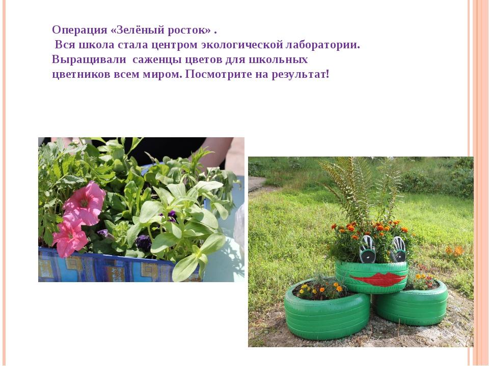 Операция «Зелёный росток» . Вся школа стала центром экологической лаборатории...