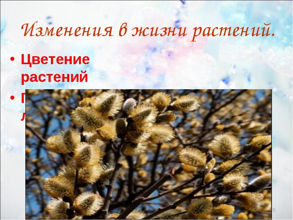 * Изменения в жизни растений. Цветение растений Появление листьев