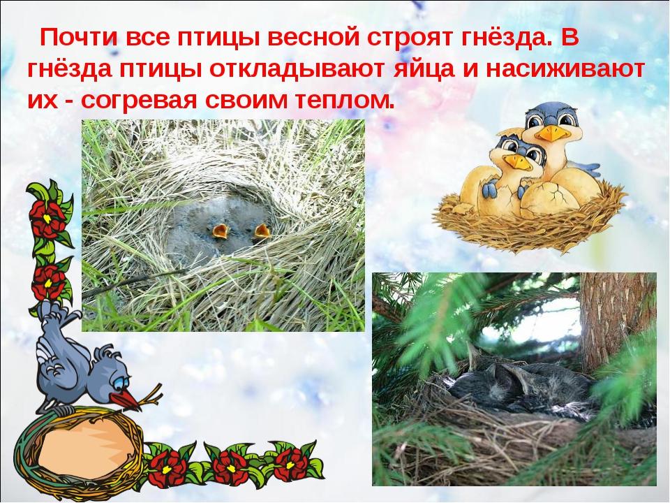 Почти все птицы весной строят гнёзда. В гнёзда птицы откладывают яйца и наси...