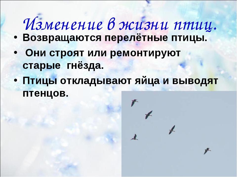 * Изменение в жизни птиц. Возвращаются перелётные птицы. Они строят или ремон...