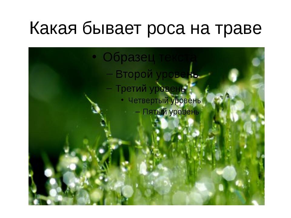 Какая бывает роса на траве