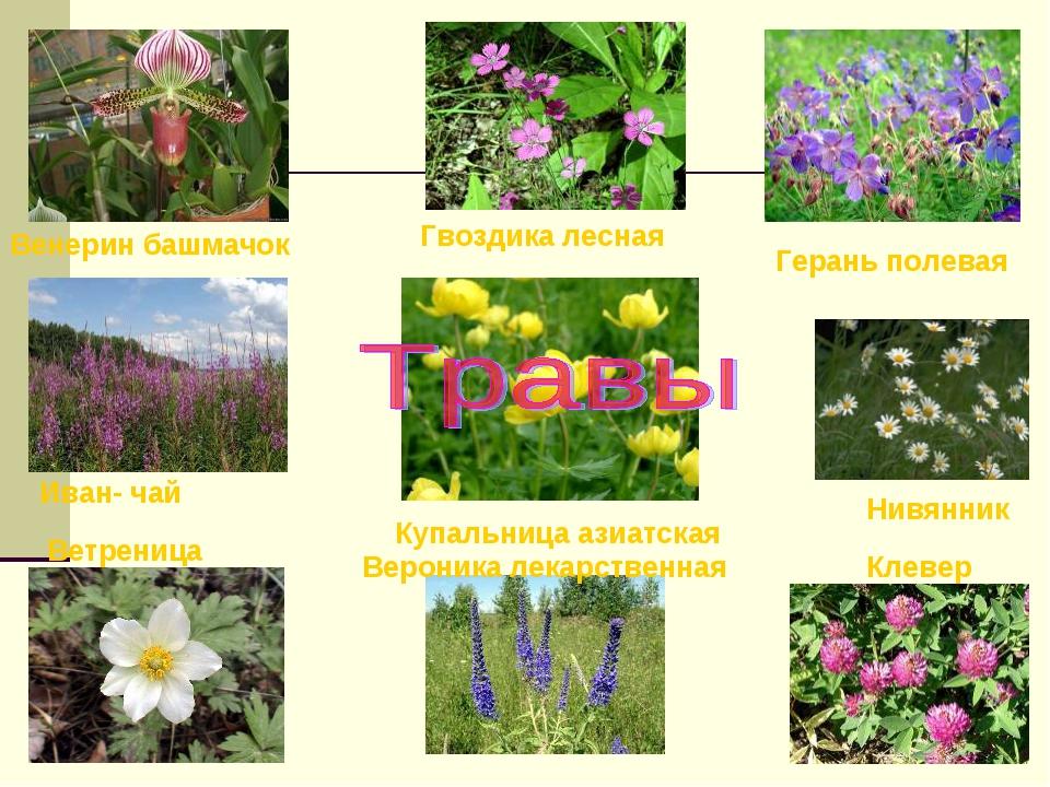 тренд цветы красноярского края фото и названия учесть, что