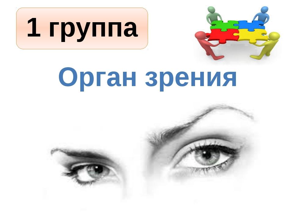 1 группа Орган зрения