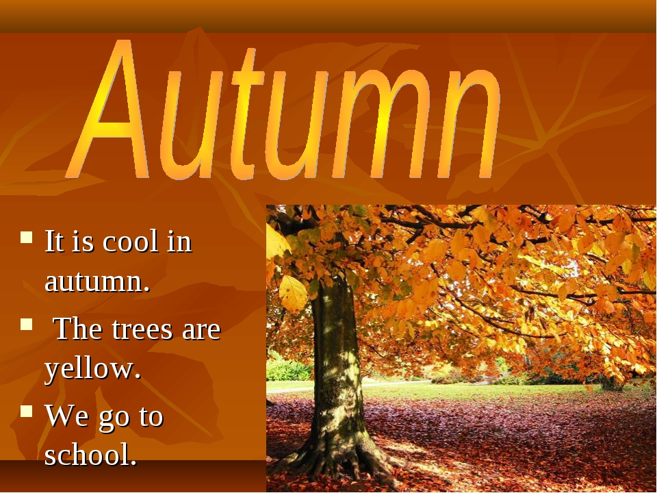 It is cool in autumn. The trees are yellow. We go to school.