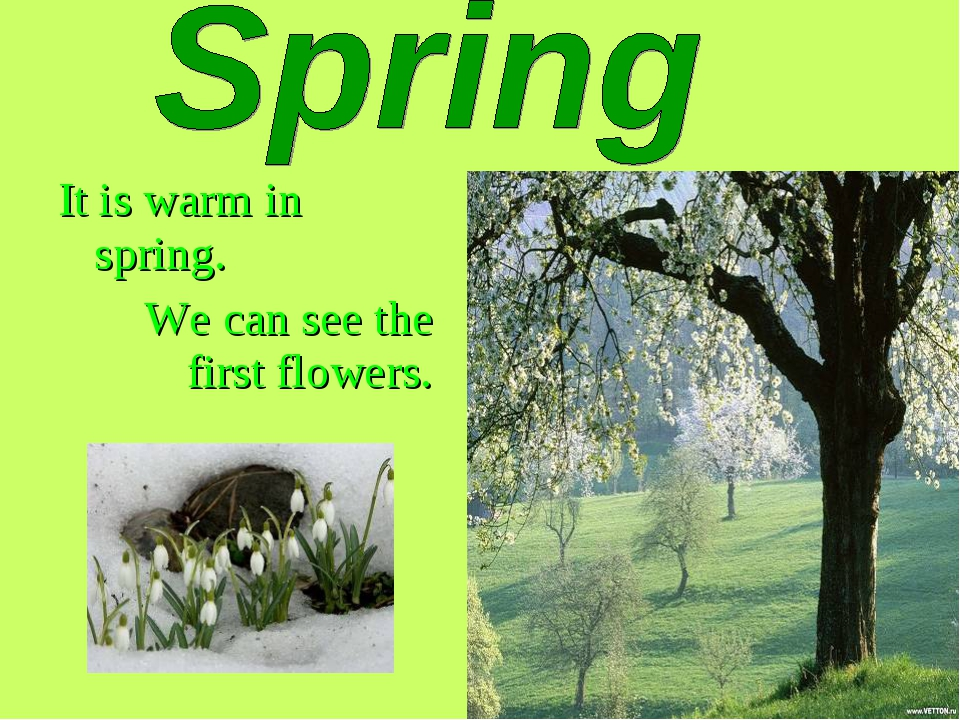 It is warm in spring. We can see the first flowers.