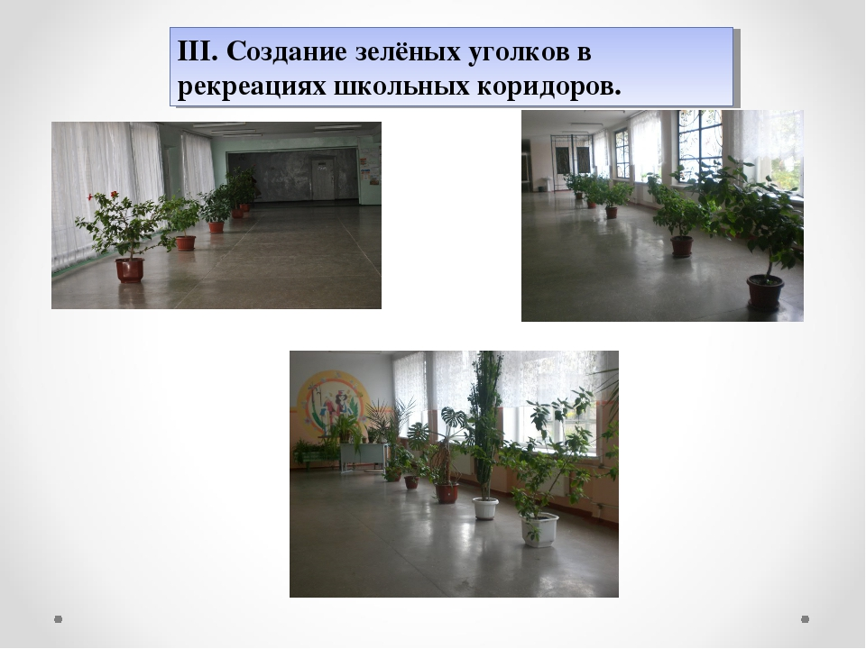 ІІІ. Создание зелёных уголков в рекреациях школьных коридоров.