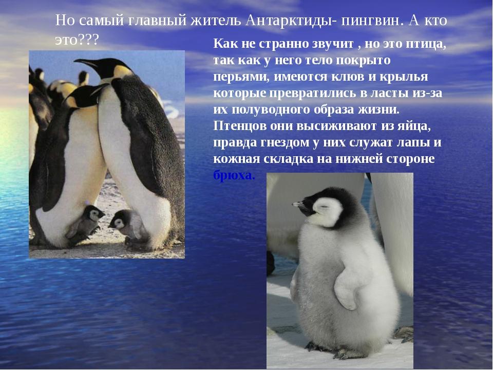 что животные антарктиды фото с названиями и описанием том, кто это