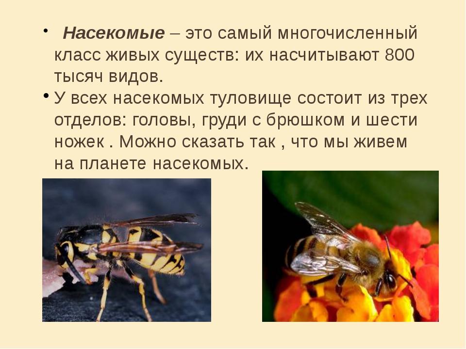 Насекомые – это самый многочисленный класс живых существ: их насчитывают 800...