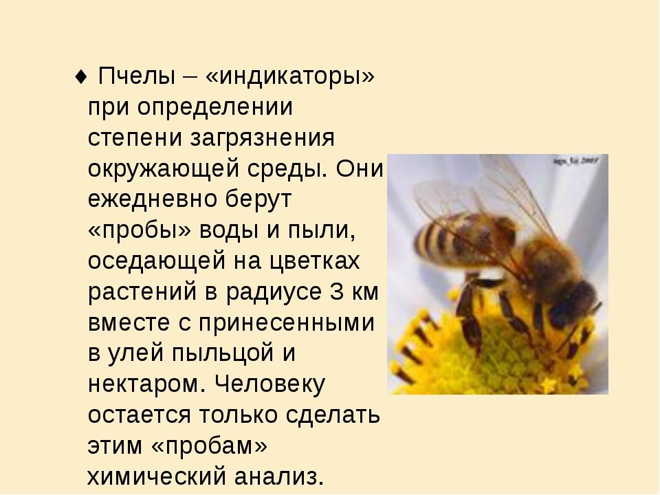 Пчелы – «индикаторы» при определении степени загрязнения окружающей среды. О...