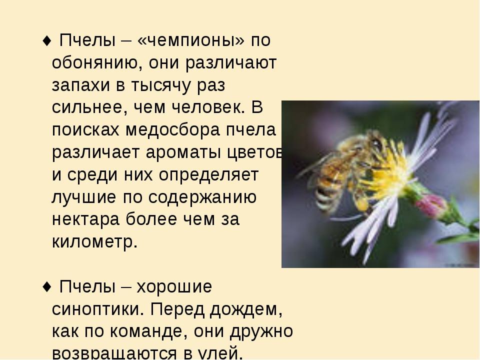 Пчелы – «чемпионы» по обонянию, они различают запахи в тысячу раз сильнее, ч...